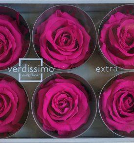 Rosa stabilizzata rosa scuro