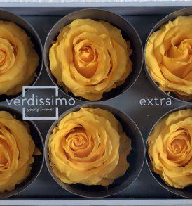 Rose stabilizzate Giallo caldo