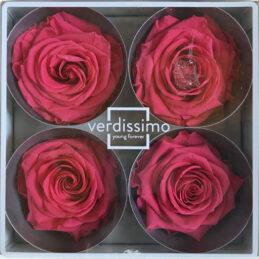 Rosa stabilizzata grande Dark Pink
