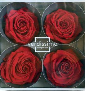 Rosa stabilizzata grande rossa