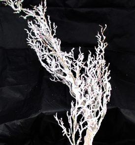 Ramo albero innevato