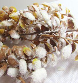 Ramo di eucalipto invernale floccato