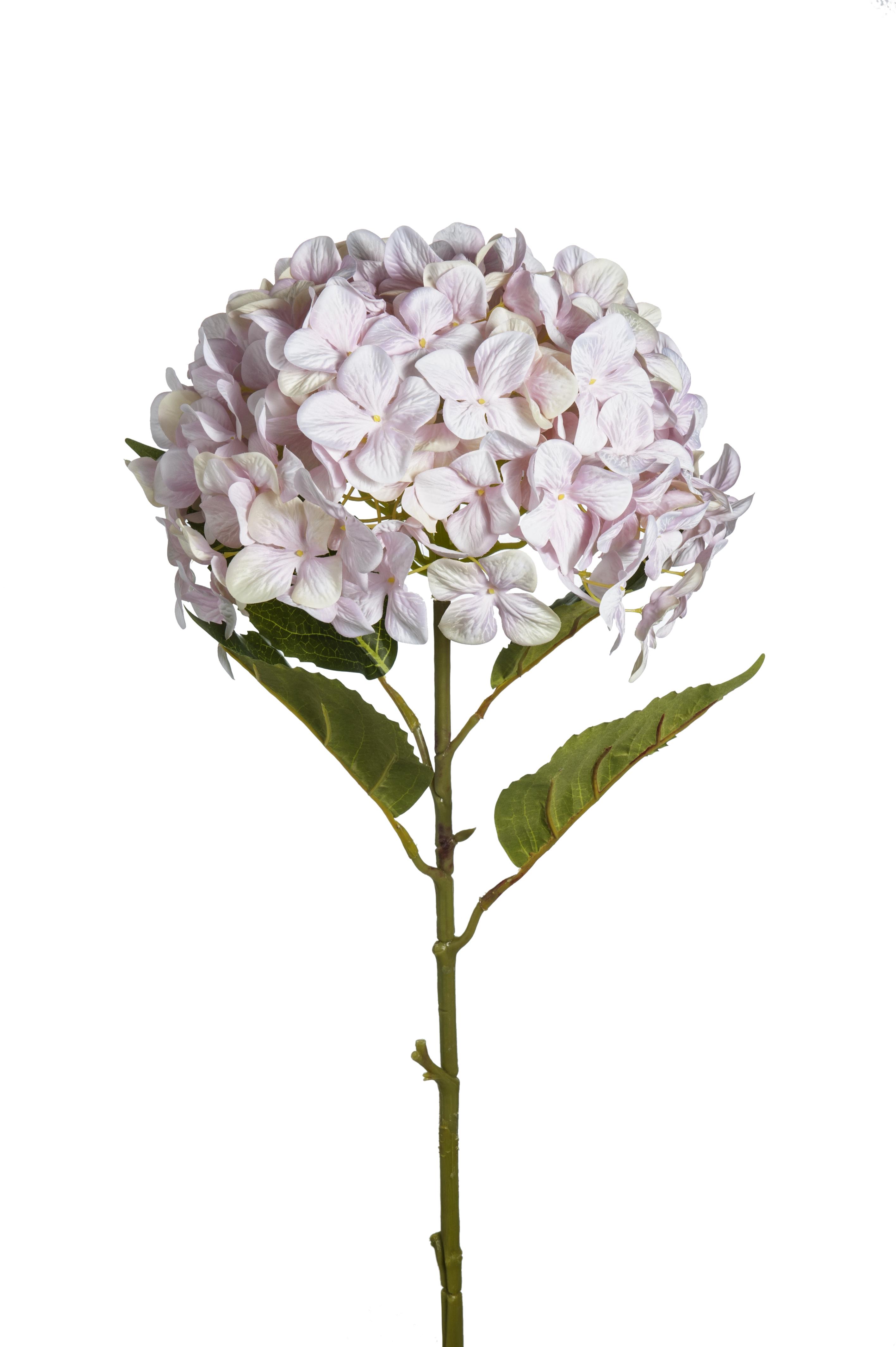 Fiori Di Ortensia Secchi ramo di ortensia rosa